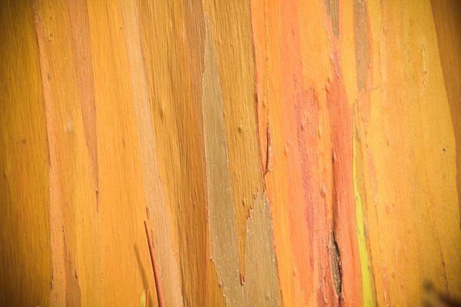 Striped wood by Bryce Eriksen