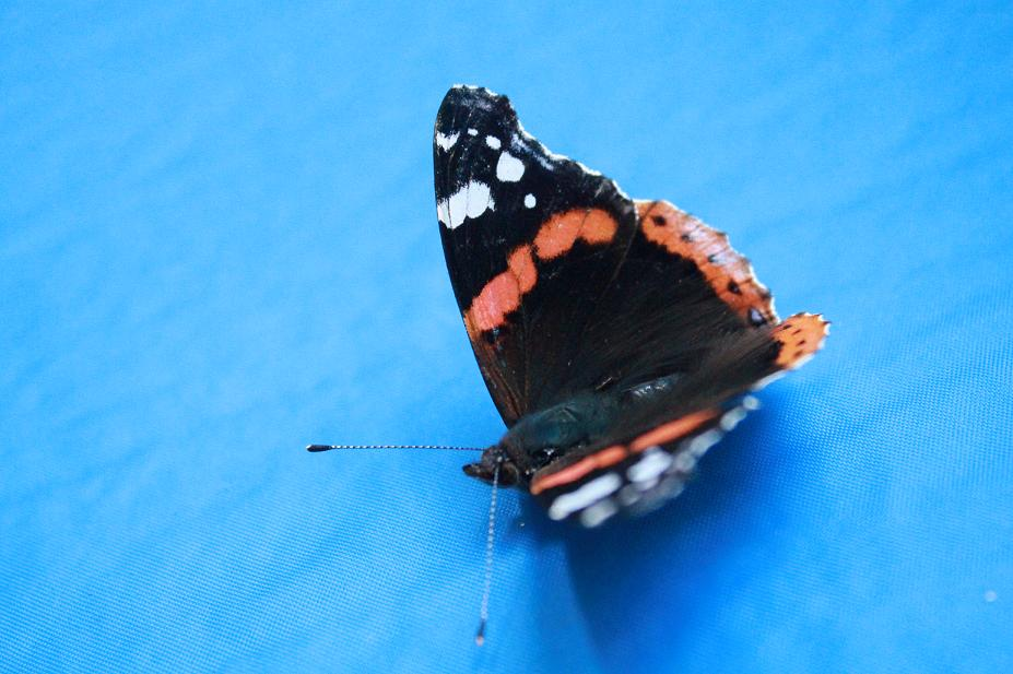 A picture of a butterfly
