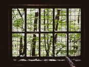 A picture of a window and leaves by Martin Wessely