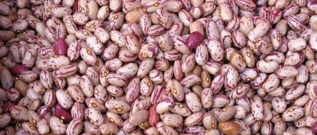 beans by stickfish