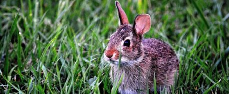 bunny by pixabay and 54118 1024
