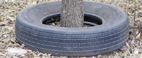 sustainable rubber