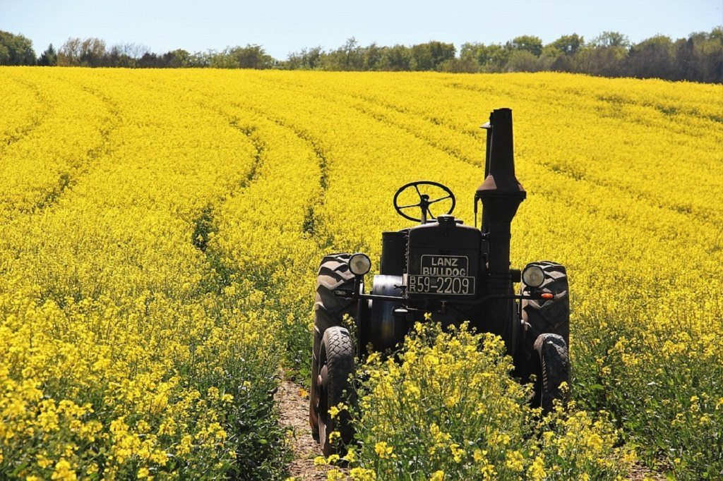 rapeseed canola oil by Pixabay and ASSY