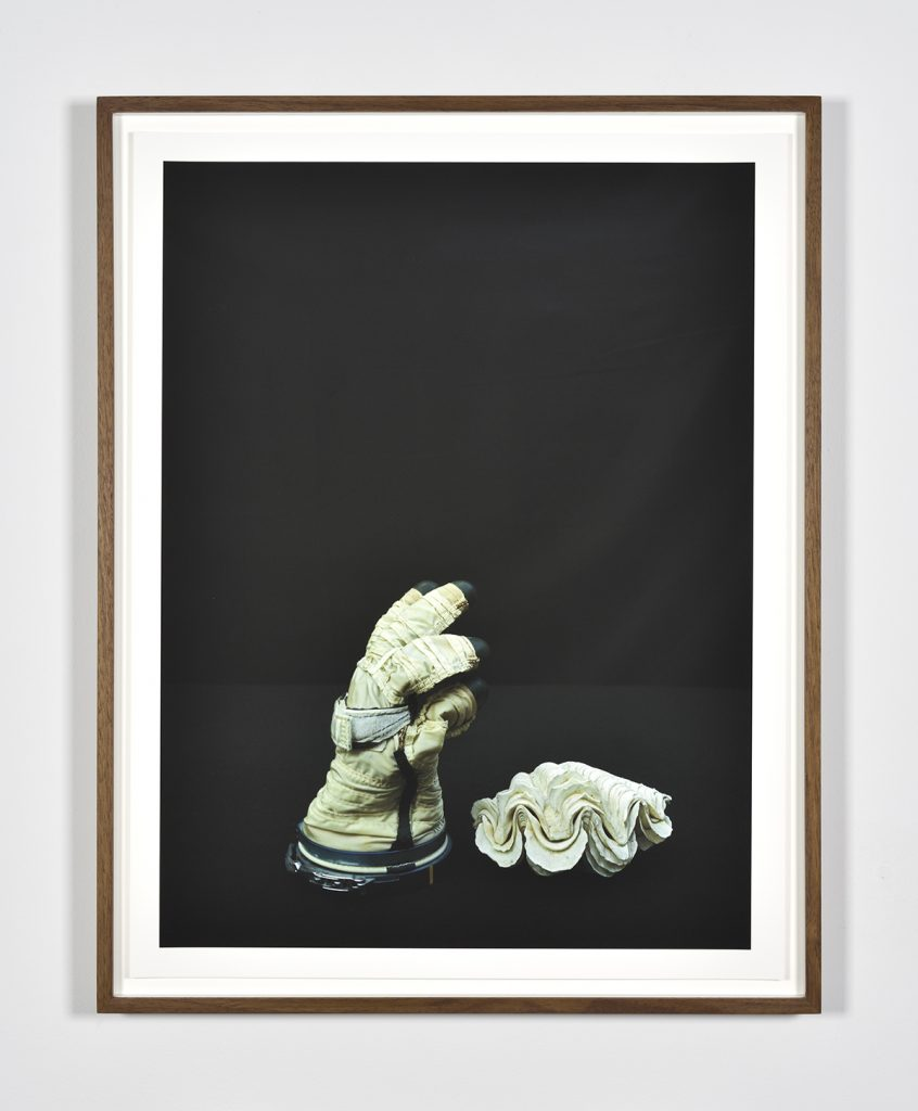still life shell and glove